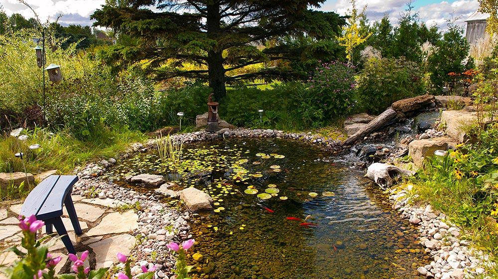 Bassin d 39 eau de type tang avec cascade plani paysage for Creation d un etang de jardin