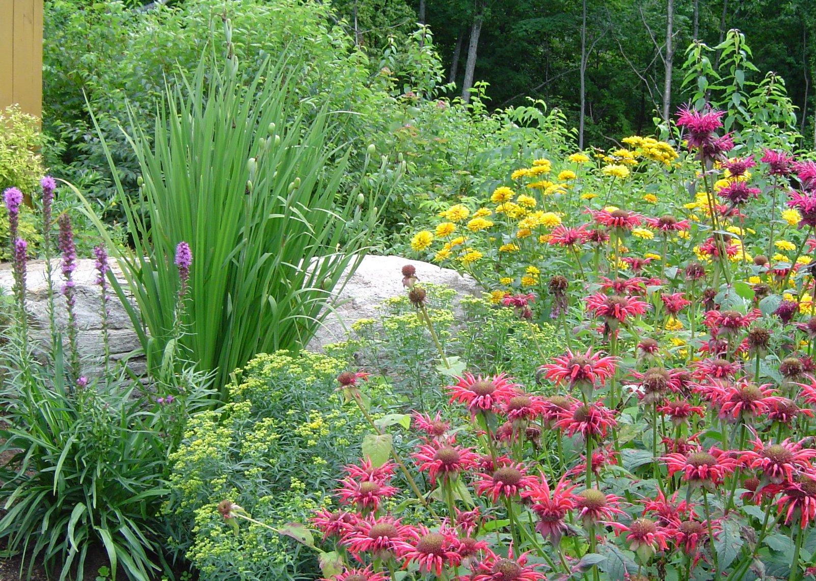 La composition d un massif de plantes vivaces plani paysage for Entretien plantes vivaces